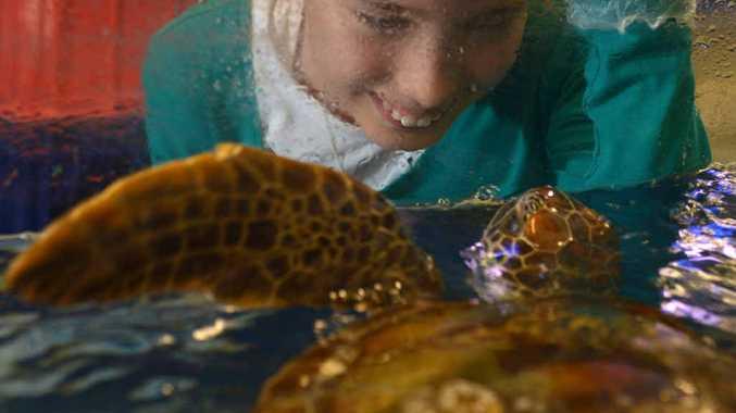 MARINE GIRL: Annabelle Jarrett, 11, is this year's SEA LIFE Mooloolaba Junior Turtle Crusader.