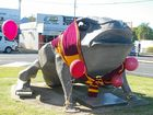 Sarina's giant cane toad dresses up for State of Origin