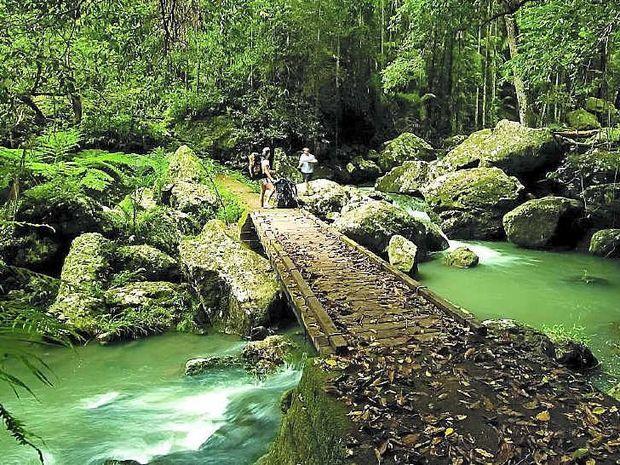 GOING TROPICAL: The wet, tropical rainforest environment of Kondalilla Falls, Montville.