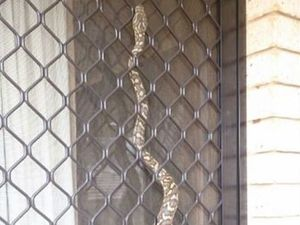 Snakes alive! check out this carpet python