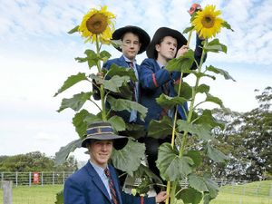 It's all down to the soil, say super-size sunflower winners