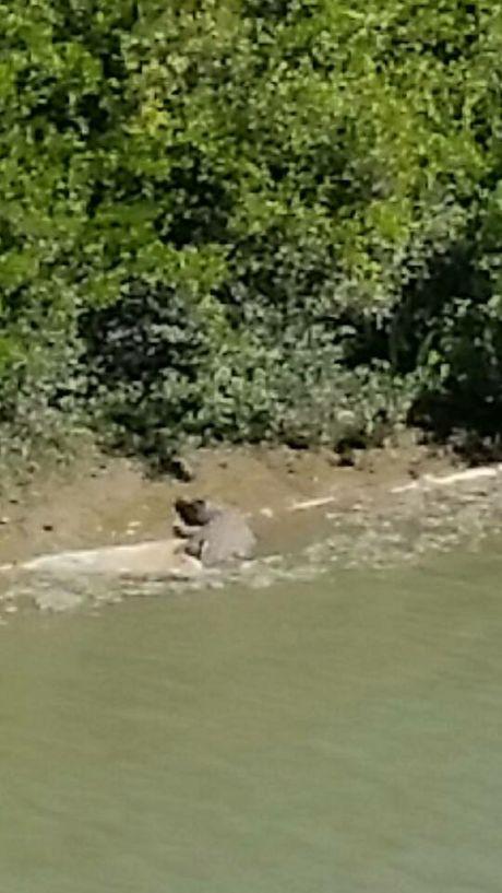 Donna Pullen also saw the same crocodile at Sandy Creek.
