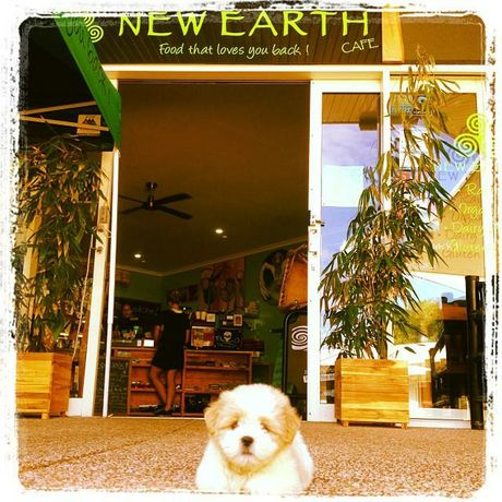 New Earth Cafe Coolum is dog friendly