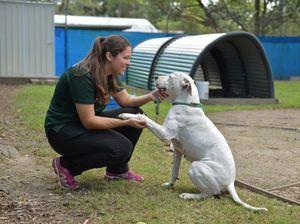 PHOTO ESSAY: Behind the scenes Sunshine Coast Animal Refuge