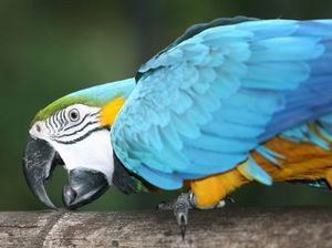 Three new macaws for zoo after two died this year