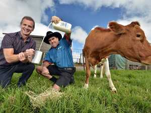 Maleny Dairie's milk is being offered at McDonalds Nambour and Coolum.