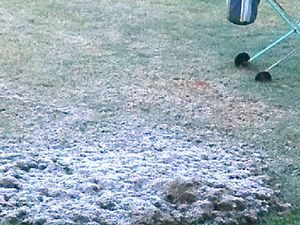Cold snap starts to bite across Darling Downs