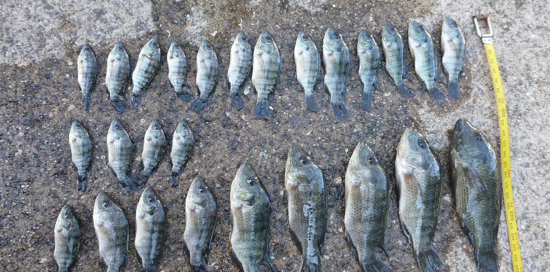 A Sunshine Coast fish breeder has been fined $2617 for a number of offences.