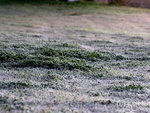 Toowoomba coldest place in Queensland this morning