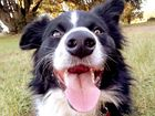 POLL: Vote for the Cutest Dog of the Northern Rivers