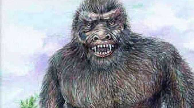 YOWIE HUNT ON: The  Mulgowie Yowie has proven an elusive creature over the years but the QT is set to go hot on its trail once again.