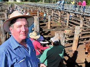 Cattle prices expected to dip during winter months