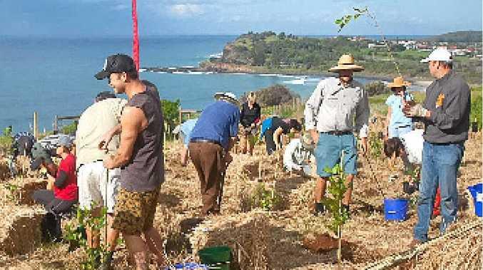 HARD AT WORK: Volunteers at the Lennox Head Community Tree Planting Day on Lennox Headland last year.