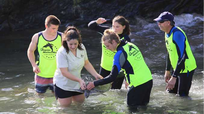 BACK TO THE SEA: Jetty High School students help to release sea turtles nursed back to health at Dolphin Marine Magic.