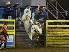 Sam Mason (Open Bull Ride) in Round 6 of the Top Guns Rodeo series at the Great Western Hotel on Saturday night. Photo: Chris Ison / The Morning Bulletin
