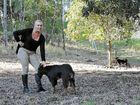 Islander goats on mainland have meat market potential