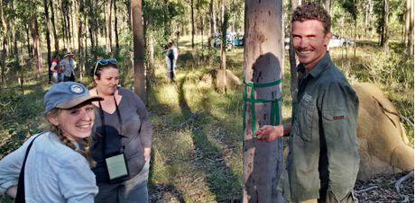 FIGHT BACK: UQ's Sean Fitzgibbon leads volunteers monitoring koalas at Koala Crossing.