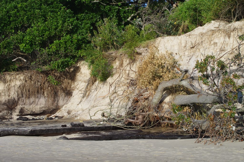 Deb Milgate took these photos of the erosion damage at at Clarkes Beach this morning. Photo Contributed