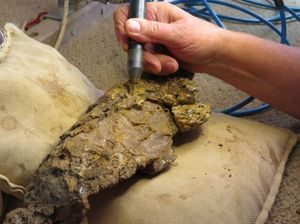 Dinosaurs bones up to 98 million years old dug up in Qld