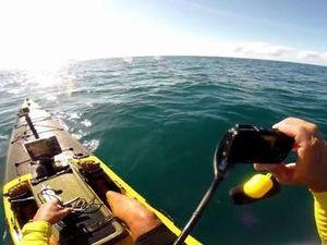 Whale swims under kayak