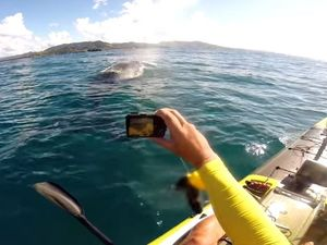 VIDEO: Kayaker captures moment whale swims under him