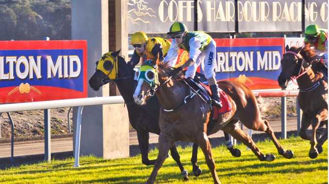 After finishing third behind stablemate Southern Shimmer in 2014, Single Spirit continues his campaign to win this year's Coffs Harbour Gold Cup with a start in the Wauchope Cup at Kempsey on Sunday.