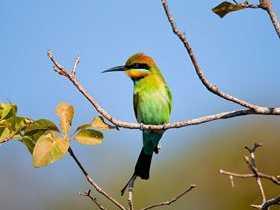 New bird column talks about the rainbow bee-eater
