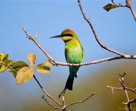The beautiful rainbow bee-eater.