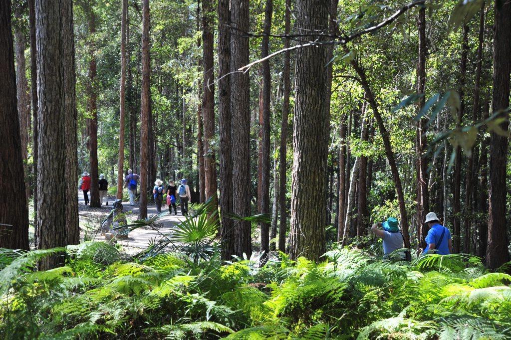 Maroochy Botanical Gardens make for a great stroll.