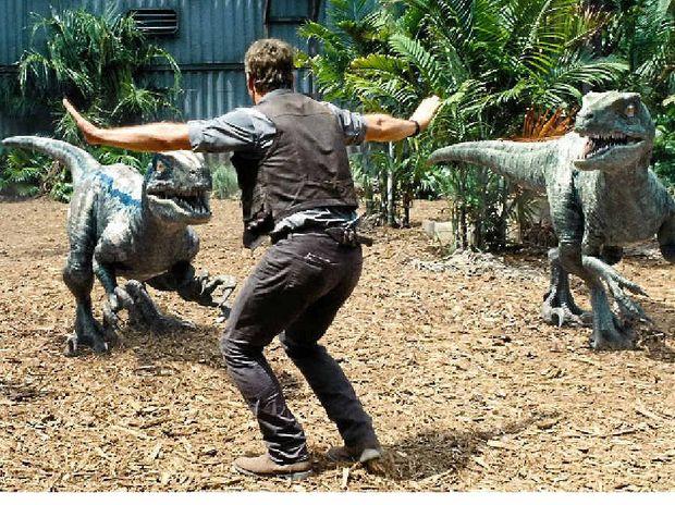 DINO-MITE: Chris Pratt's character Owen has developed a bond with the fierce.