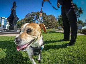 Dog owners putting vietnam veterans through more heartache