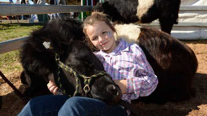 SHE'S MY GIRL: Kate Hepburn of McKees Hill with her Belted Galloway, Jade, at Primex.