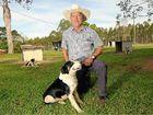 Alstonville's dog trials this weekend