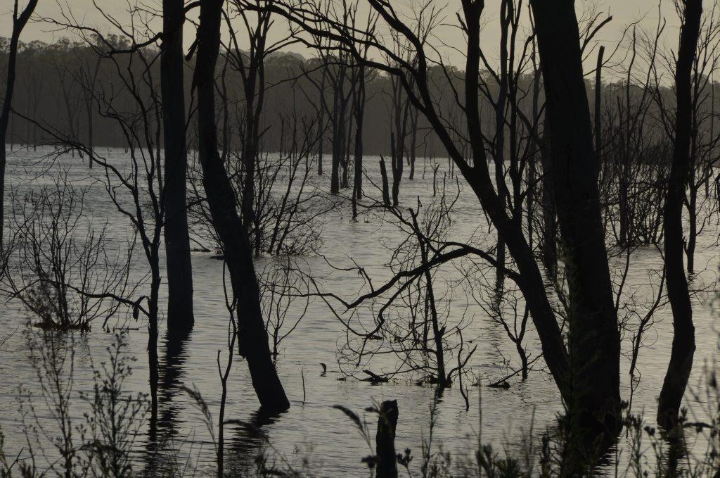 Wooroolin Wetlands Photo Keagan Elder / South Burnett Times