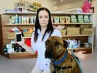 OFFLINE: Greater Springfield Veterinary Hospital practice manager Dr Rachel Ball questions why it has been difficult to have phone and internet connections set up at her new practice.