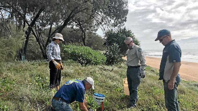 LIGHTS OUT: Volunteers Fiona Hoffman and Gary Brandon with QPWS's Peter Wright and Neil Cambourn plant the dunes to cut the glow for nesting turtles at Mon Repos.