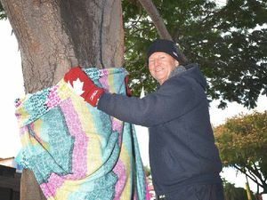 Trees along Mary Street rug up for winter