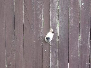 YOUR PHOTOS: Funny things your pets do