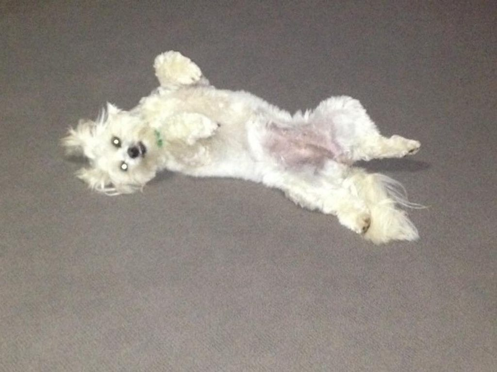 Mark Cariss: This is our dog Mia. This is how she sleeps, has done since she was a pup. Photo Contributed
