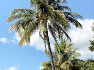 Residents in revolt over coconut plan