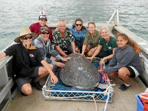 Green turtle 'Ella' swims free