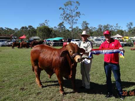 Champion Bull, Glenlands Torpedo, with Jason Childs ( Glenlands) and James Robertson, sponsor of the Bill Robertson Toyota Interbreed Competition.