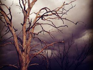 After lightning comes...