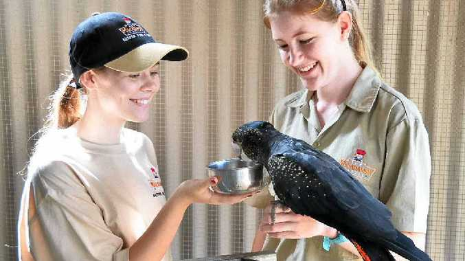 Keeper For a Day and Wildlife Guardians are some of the activities that will be offered by the Macadamia Castle during the school holidays.