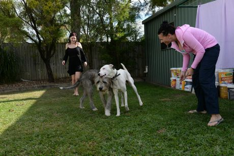 LUCKY DOG: Shayla Kuplen and her mum Marissa Pirovano are looking after stray Jay Jay who has been living on the streets of Bundaberg for a while. Photo: Mike Knott / NewsMail