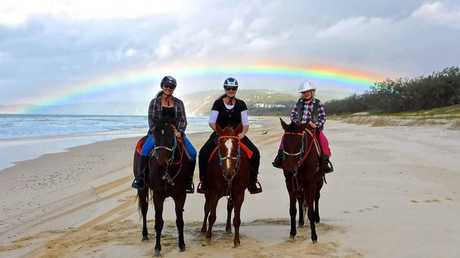 Michelle Heaton While on a ride with Rainbow Beach Horses we were presented with this beauty