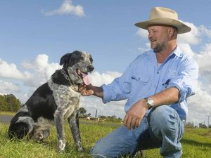 Attaboy! Cattle dog trainer claims Sportsperson award