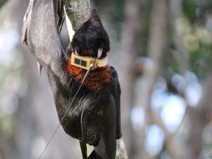 Council tracks bats' flights of fancy across region