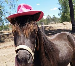 Head to the Total Equine Expo at Toowoomba Showgrounds for everything horse-related.