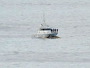 Water Police watch on as large sharks fed off a dead sperm whale floating off Campbell's Beach this morning.